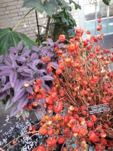 Photos: Field trip to the Botanic Gardens