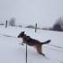 Emily Gorham's dog, Duncan leaps through the snow.  His joyful attitude is not what plenty of snowed in humans feel.
