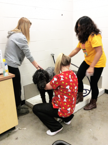 Pre-vet class helps dogs spruce up for the holidays