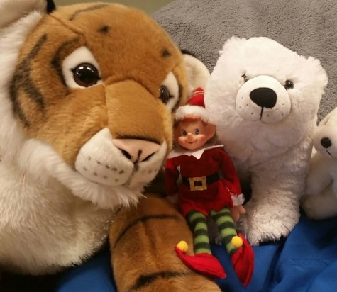 12/8/15 Where is Newsie the Elf Hiding?