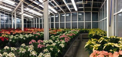 FFA sponsors annual poinsettia sale: Order by December 1