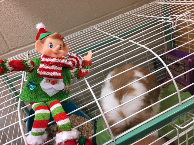 12/19/17: Where did Elfie take the selfie?