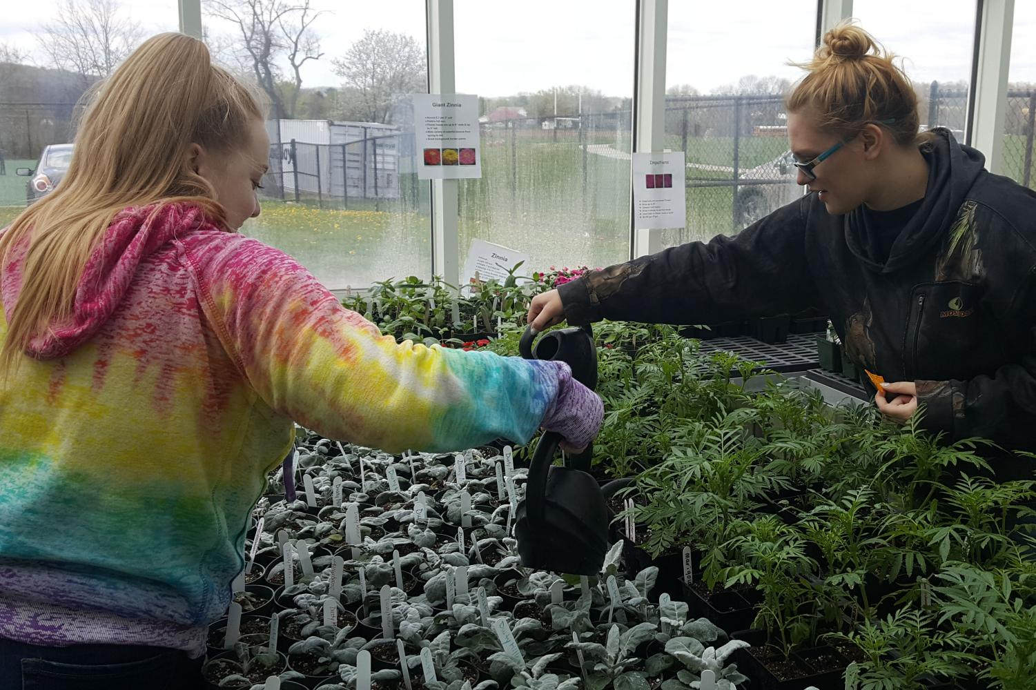 Mikayla Jordan and Breanna Spielman watering plants at the plant sale.