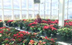 Horticulture class hosts annual poinsettia sale: Photo of the day 11/28/18