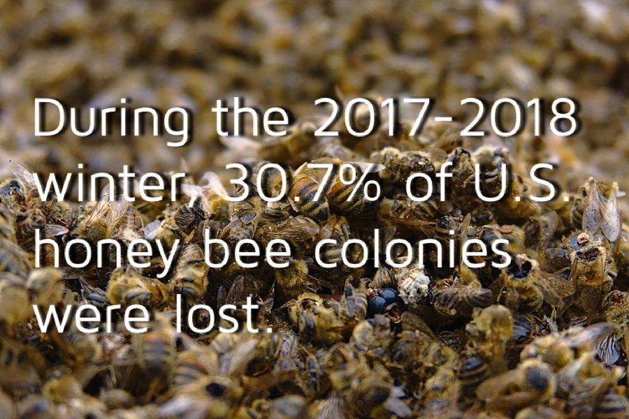 According+to+beeinformed.org%2C+the+U.S.+honey+bee+colony+population+decreased+about+30.7%25+during+the+2017-2018+winter.+