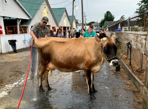 Showing an animal at the Frederick Fair: Wash, dry, clip, cut…repeat