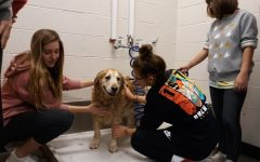 """Pre-Vet students agree: Grooming their teachers' dogs is """"paw-some"""""""
