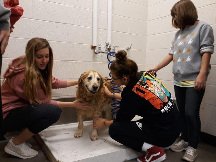 Gemma Davies and Jaden Legambi wash Beachy's dog Rosie.