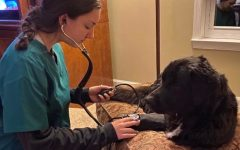 Erica Blockinger practices checking blood pressure on her dog, Bear.